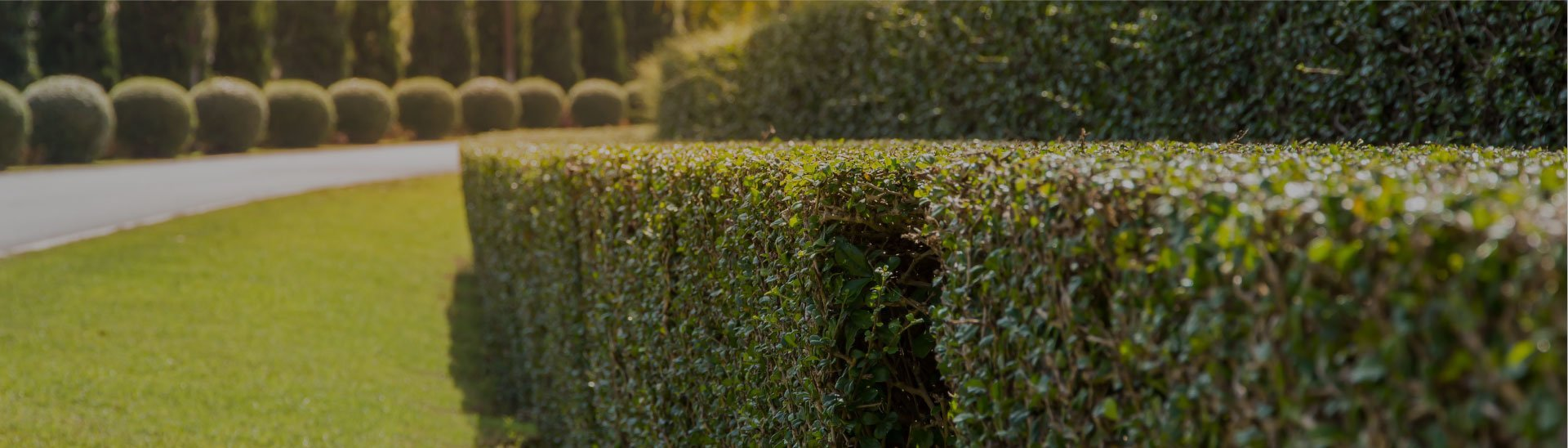 instant hedgeHedging and Screening Banner Hedges