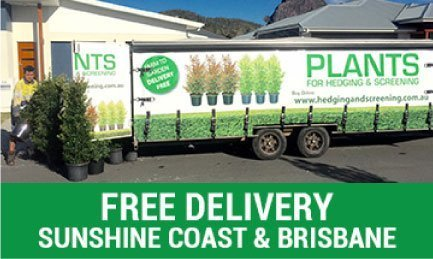 Free Deliveryv Sunshine Coast and Brisbane