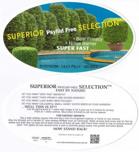 Superior-psyllid-free-selection